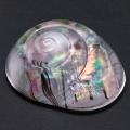 glassshell01