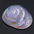 glassshell02
